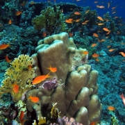https://www.flickr.com/search/?user_id=93242958%40N00&view_all=1&text=coral%20reef