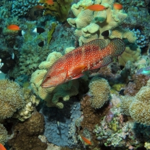 Coral and fish. https://www.flickr.com/photos/dkeats/6443167939/in/photolist-aPmVmp-9yzaGv-9yz9T4-aLCKdc-aWkCNc-9yCbss-auBfSi-aLCQgZ-aHzJLe-aHzG4n-b5pXPg-aHzyWV-aXCtU2-aLCNuz-arKABs-auBhkD-aMRnpK-atc8AM-9y2MW6-aWkD3e-9yCaKJ-aLCFdK-ateMFA-aqAySR-b5pYwi-asyhjv-aPmWpK-aqDcTJ-arcaHZ-asSt3t-azL5RA-asV62q-auDUgA-aWkAC2-aE3y4S-auBgyX-aqaWa7-auBfDv-auBhdB-aMRqMc-aqDkvU-aMRqrH-aLCHvr-asAVLQ-aLCFRt-aPmRLe-aWkB22-a6ZZqY-anwSpG-aTiYKi