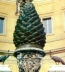 <p>pine cone in the Vatican courtyard. Pine cones symbolized fertility in pagan religions throughout history. The goddess Isis was always depicted with two peacocks, similar to the two peacocks next to the pine cone. </p>