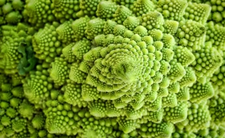 Romanesca Broccoli by Chris Yarzab on Flickr