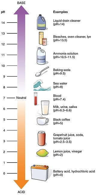 pH values of some common substances. Illustration from Anatomy & Physiology, Connexions Website