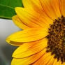 Source: Malte Sörensen on Flickr.