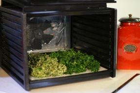 Kale chips in the dehydrator.