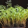 CC Sharealike Wolfgang Lonien on Flickr https://www.flickr.com/photos/wjlonien/5723087343/in/photolist-9HJjuK-9HJjtH-9HLUY5-9HJjvg-9HJjvv