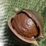 A macadamia nut. Source: Tatters:) on Flickr.