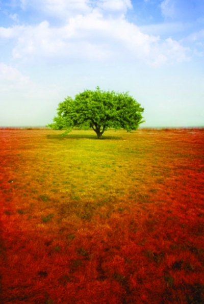 Dreamscape series - a single tree in a field of yellow and red
