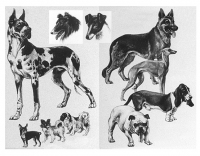 Here we see the great variations in dogs' sizes, their shape, and their ears yet this is one species and the variation is as great as that found in wild species which are all classified as different species. Variety is a feature of the gene pool and does not necessarily imply that they evolved over millions of years.