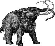 An artist's rendition of a woolly mammoth trapped in ice in Siberia.Michael Oard tells us that how woolly mammoths died is an issue of contention among scientists and Creationists alike:Some creationists believe the mammoths died during the Flood, while others believe the evidence points to a post-Flood demise. Since there was much more variety within each type of animal before the Flood, mammoths very likely lived before the Flood. Therefore, fossils of these pre-Flood mammoths should exist in sedimentary rocks in some areas. However, there is plenty of evidence that the woolly mammoths in Siberia, Alaska, and the Yukon and almost all other surficial sites in the Northern Hemisphere died after the Flood.Read his entire article on mammoths and extinction Image source: Wikimedia Commons