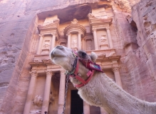 Camel sitting in front of Al Khazneh in Petra CC BY-SA 3.0 Mileli https://commons.wikimedia.org/wiki/File:El_Khasneh_and_the_camel.JPG