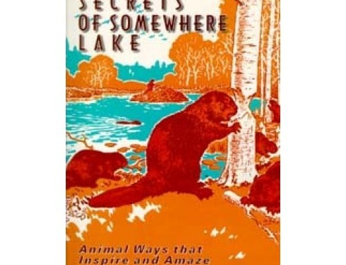 Seven Secrets of Somewhere Lake (Book)